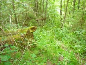 Ёжкин лес (Явонь)